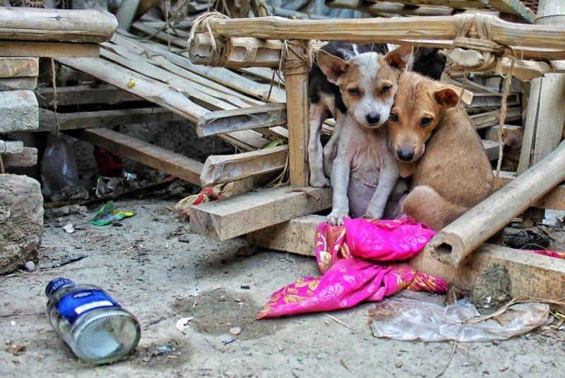 abandoned animals